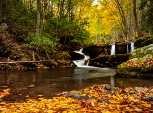 Fall leaves floating in a river in the Smoky Mountains.